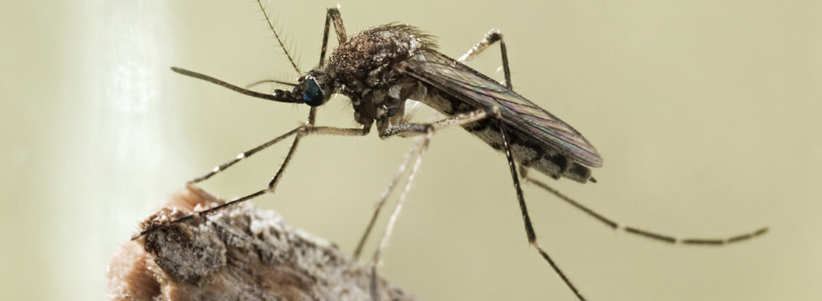 mosquito treatment in Chickasaw